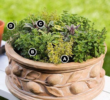 herb pots outdoor miniature herb garden