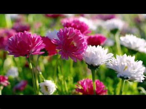 flower wallpaper youtube flower wallpaper hd youtube