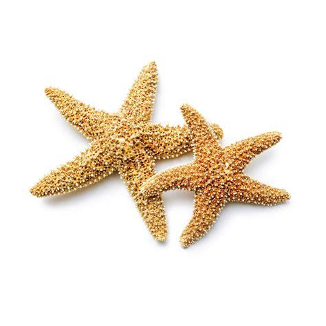 starfish images fish starfish nemours reading brightstart