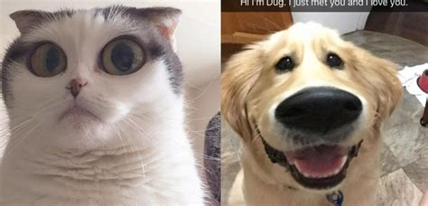 people   snapchat filters   pets
