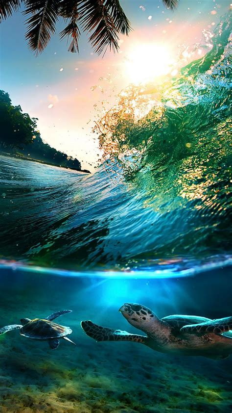 wallpaper island n6 hd dreamboard theme for iphone 4 tropical sea island turtles iphone 6 plus hd wallpaper jpg