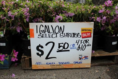 plant l home depot sweet deals at the home depot plant and garden sale one