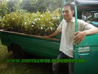 Bibit Durian Bawor Di Jogja harga bibit durian bawor bibit durian bawor jogja