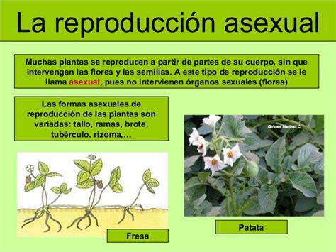 imagenes de flores que se reproducen asexualmente las plantas