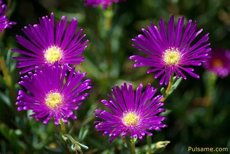 imagenes flores moradas vivir solo cuesta vida flores
