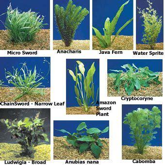Sofa Types Best 25 Aquatic Plants Ideas On Pinterest Fish Tank