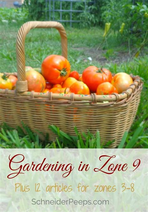 Zone 9 Gardening by Zone 9 Gardening Plus Get Planting Tips By Zone For Zones 3 8