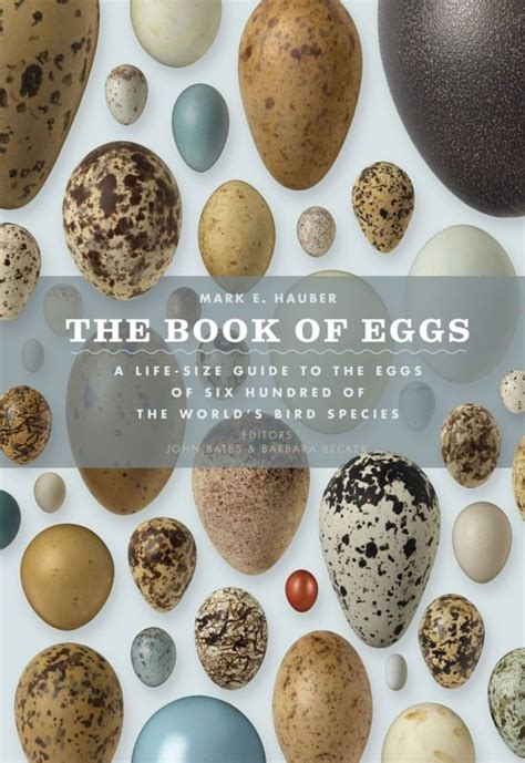 the druid s egg book one of the chronicles of conran seahorn books the world s most beautiful birds eggs new scientist