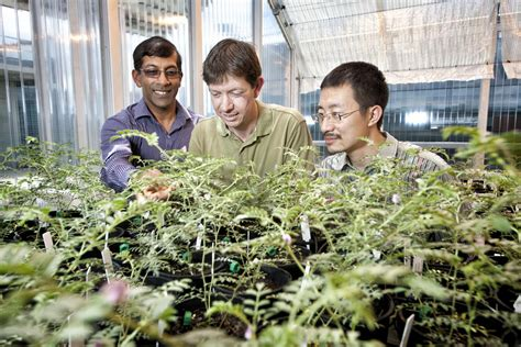 how to bring a plant back to life bringing plants back to life image eurekalert science
