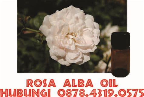 Minyak Atsiri Mawar harga minyak atsiri mawar hub 0878 4319 0575 jual