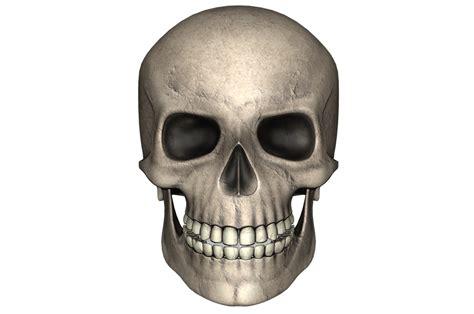 imagenes de calaveras humanas ilustraci 243 n gratis cr 225 neo d 237 a de muertos hueso imagen