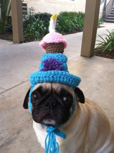 pug with birthday hat birthday hats the cutest b lovely events