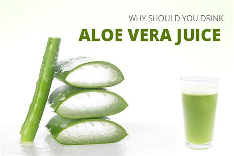 Would You Drink This Aloe Juice by Why Should You Drink Aloe Vera Juice Healthcare