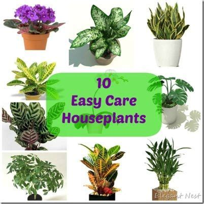 easy to grow indoor plants 46 best house plants images on pinterest house plants