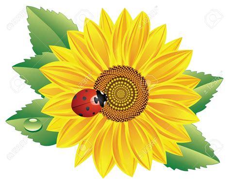 clipart graphics sunflower cliparts 101 clip