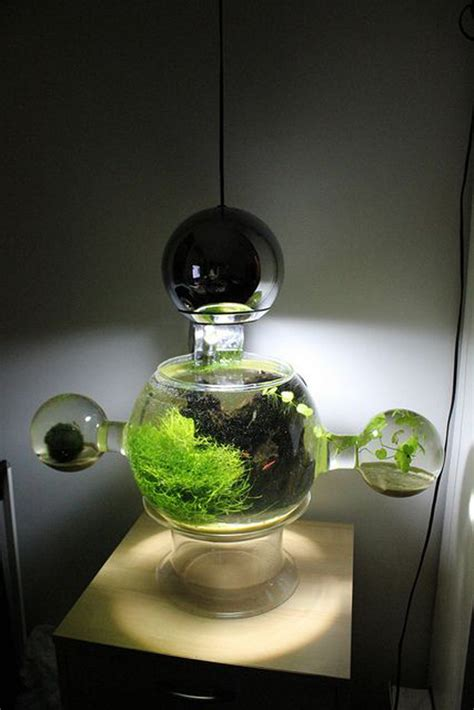 creative aquariums  tiny ideas homemydesign