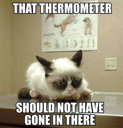 Best Of Grumpy Cat Meme - grumpy cat goes to the vet