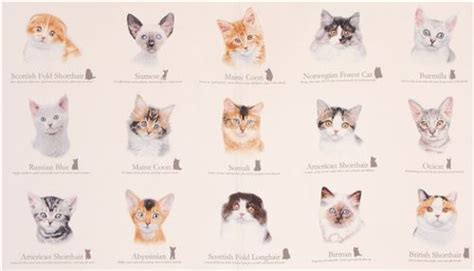 le mit namen tissu cr 232 me clair avec des chats cat breeds par elizabeth