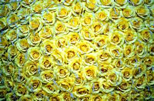 Yellow roses free stock photo hd public domain pictures