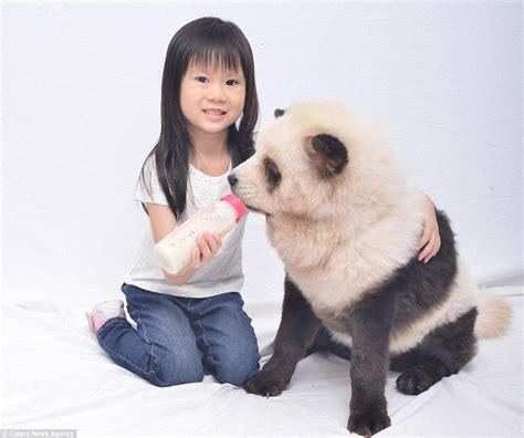 can dogs eat soy owner of dyed panda dogs hits back at critics saying she is cruel daily mail