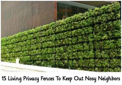 how to get more privacy in backyard 15 living privacy fences to keep out nosy neighbors lil moo creations