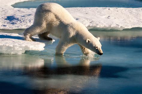 orso casa vacanzaltre a casa dell orso polare popolis