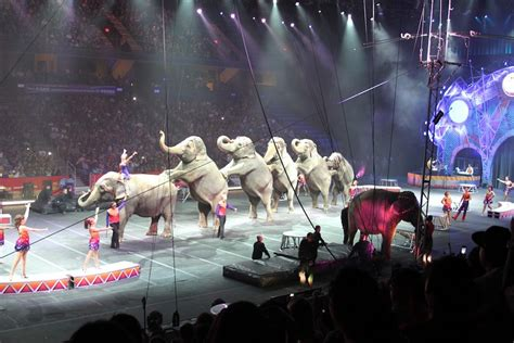 Garden Brothers Circus by Ringling Bros And Barnum Bailey Circus 10 18 13