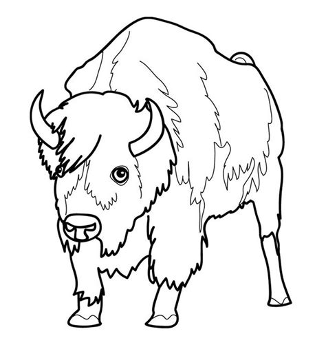Free Printable Bison Coloring Pages For Kids Bison Coloring Pages