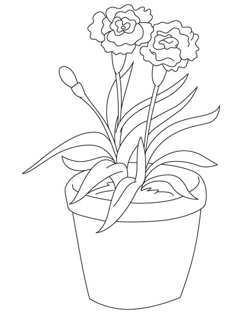 daisy flowers coloring page coloring page carnation flower