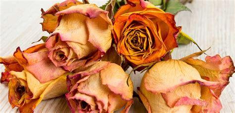 seccare fiori come seccare i fiori in modo impeccabile leitv