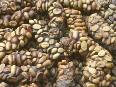 Srijaya Luwak Cofee Premium Bean wholesale coffee civet coffee luwak kopi civet cat