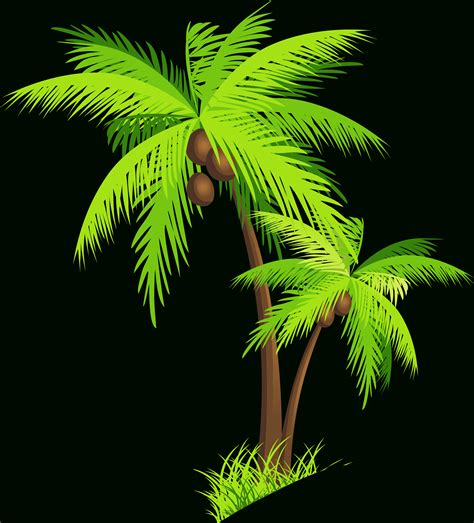 clipart alberi coconut tree images hd for drawing coconut tree png