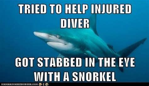 Meme Shark - misunderstood shark on tumblr