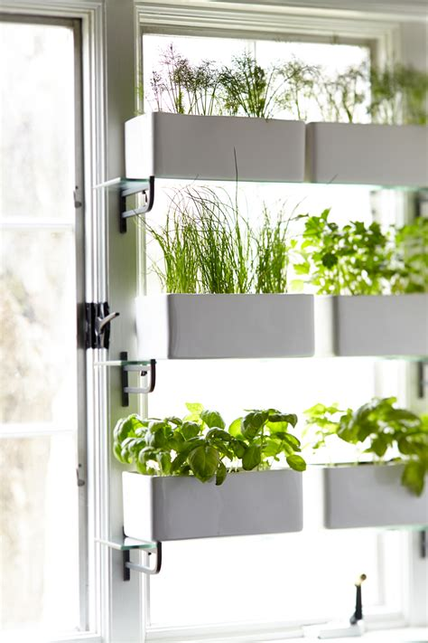 herb shelf kitchen herbs a mere life
