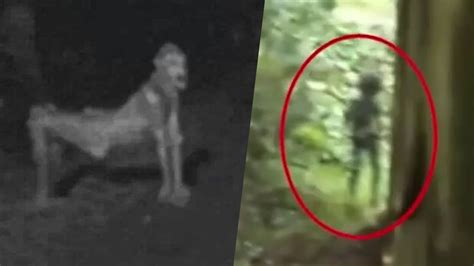 film ghost camera 5 scariest creatures caught on camera spotted in real