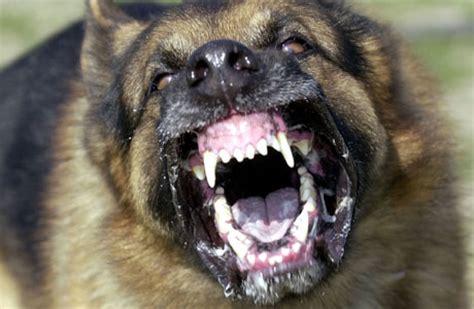 vicious dogs vicious dogs mein kf vatican ii mundabor s
