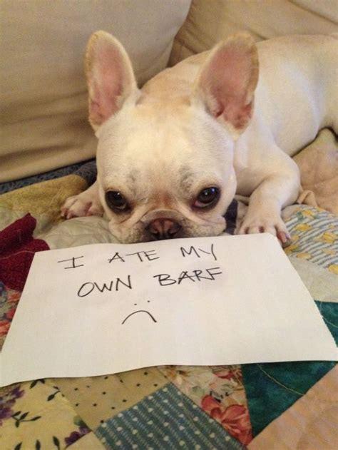 shamed dogs bad dogs publicly shamed 45 pics izismile