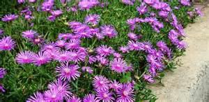 Flower Gardening 101 Perennial Flower Garden Basics Today S Homeowner