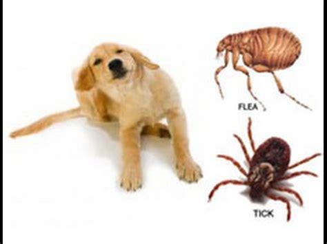 ticks in bathroom dicas para espantar pulgas dos pets animais cultura mix