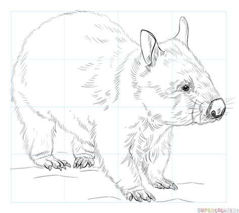 how to draw a wombat step by step drawing tutorials