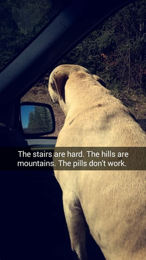 do dogs when they are dying this s snapchats of last day with dying will make you cry fullact