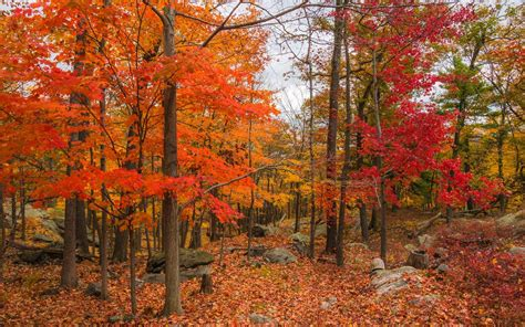 the world s best photos of autumn and woodlands flickr hive mind beautiful fall leaves around the world travel leisure