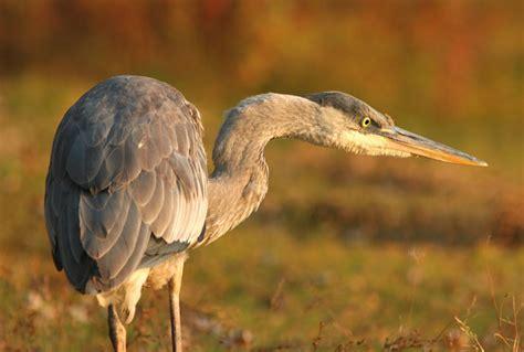 D 233 Couverte Du Promeneur D Oiseau Oiseaux Exotiques Oka The World S Best Photos Of Nature