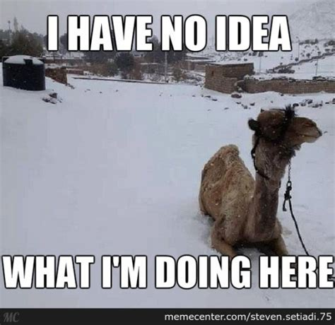 Snow Meme - 13 signs you re an expat in egypt
