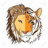 Half Lion Half Tiger Art | 1300 x 1300 jpeg 192kB