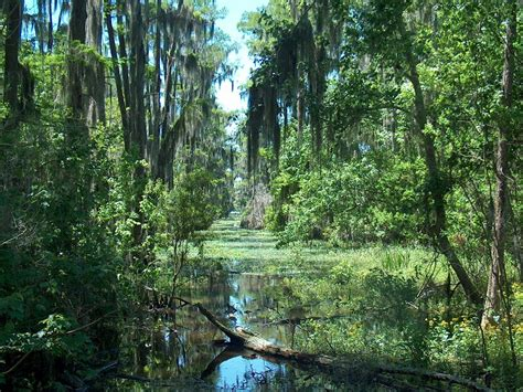 swamp national geographic society