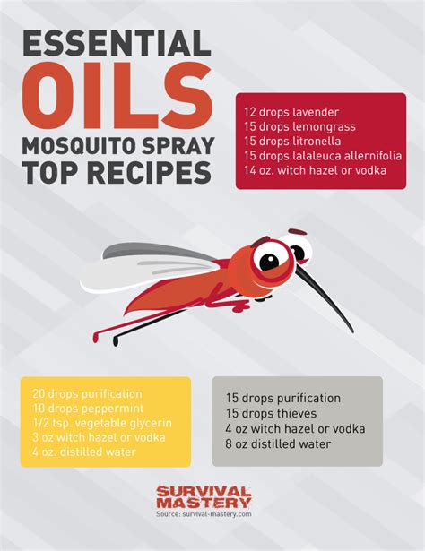 essential oils for bed bug bites essentials oils for mosquito spray infographic visual ly