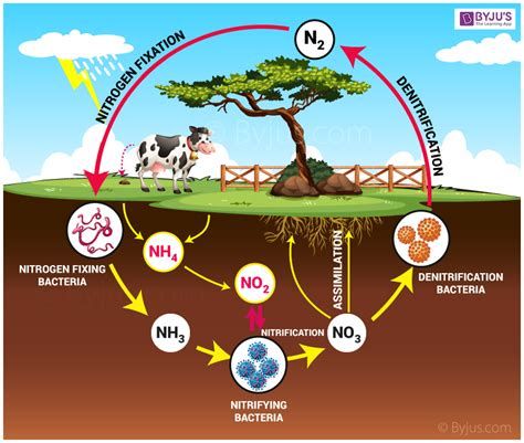 diagram of nitrogen cycle nitrogen cycle the complete process of biogeochemical cycle