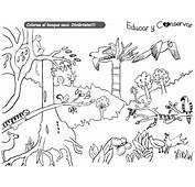 Dibujos Del D&237a Mundial De La Biodiversidad Para Colorear