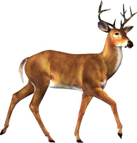 buck image deer buck clipart free clip images image 0 clipartix